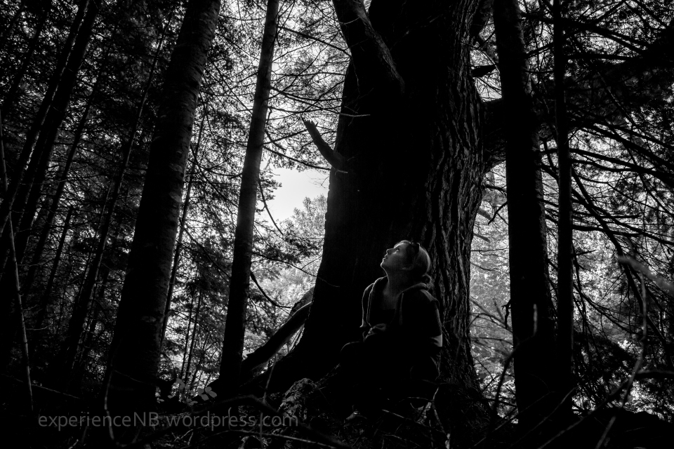 TreeHouseCamping_Miramichi_Aug29-31.2013-59